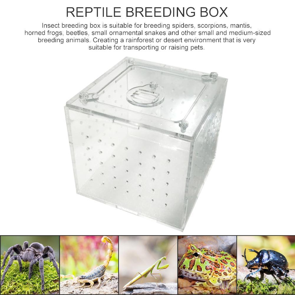Caja de alimentación acrílica transparente para reptiles, caja para insectos, Mantis rezando, jaula para reptiles, casa, jaula para insectos terrario para reptiles, caja de cría de Mantis