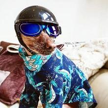 Lustige Pet Motorrad Helm Hund Katze Kunststoff Kopfschmuck Welpen Hut Kätzchen Mode Kappe Pet Zubehör Geburtstag Party Kostüme