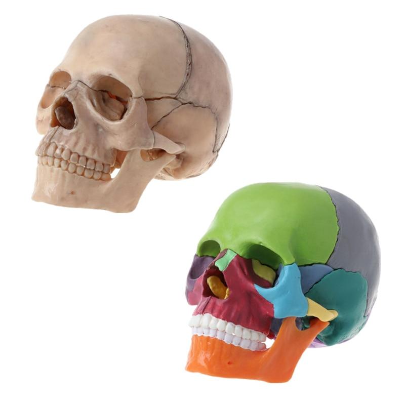 15pcs/set 4D Disassembled Color Skull Anatomical Model Detachable Medical Teaching Tool