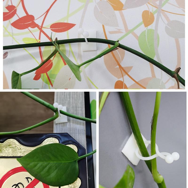 Augalinės laipiojimo sienos lipni tvirtinimo detalė, susieta - Sodo reikmenys - Nuotrauka 2