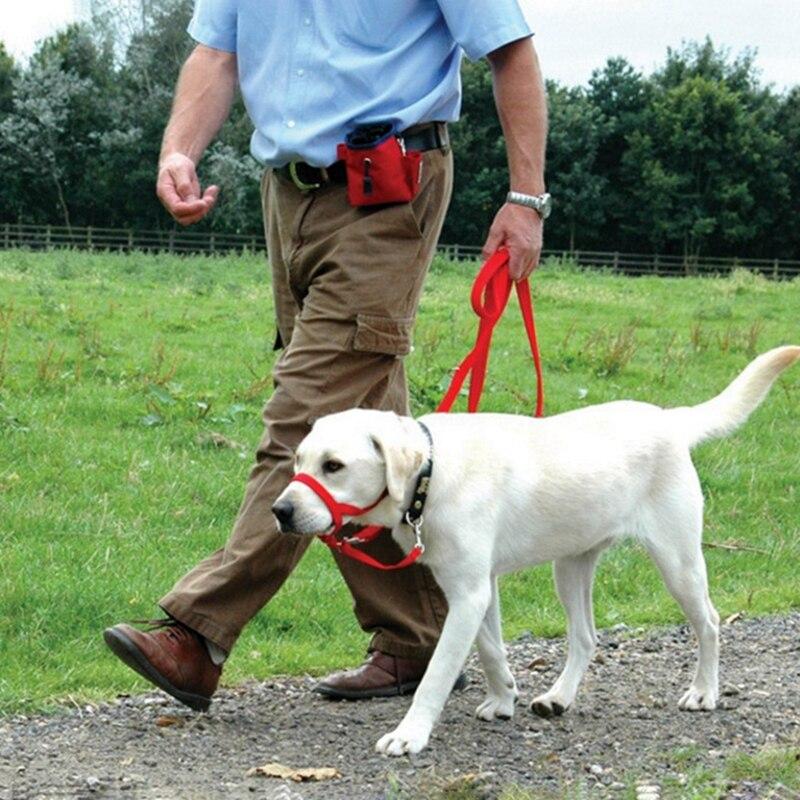 Collier tête rembourrée pour chiens, collier pour chiens, licou doux, laisse, muselettes dentraînement pour arrêter de tirer