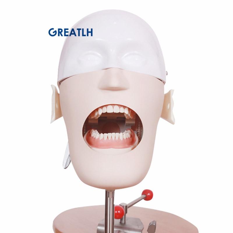 رئيس الأسنان نموذج التدريب محاكاة ممارسة نموذج لشكل الأسنان الأسنان مانيكينز فانتوم نموذج للتدريس الأسنان