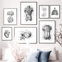 black and white brain heart skull kidney anatomy wall art canvas painting nordic posters and prints wall pictures office decor