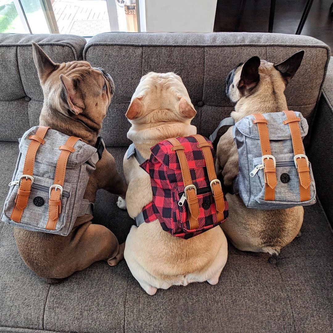 AliExpress - Bulldog Dog Travel Backpack Harness For Small Dogsr To Wear Outdoor Preppy Style Cute Dog Carrier Bag Backpack Pets Acessorios