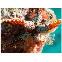 colorful print wall tapestry underwater world tapestry m1001