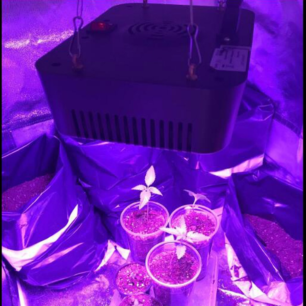 Full Spectrum 16 Bands 300W 450W Led Grow Lights Growing Lamp Plants Light Flower Indoor Lamp For Indoor Greenhouse Grow Tent enlarge