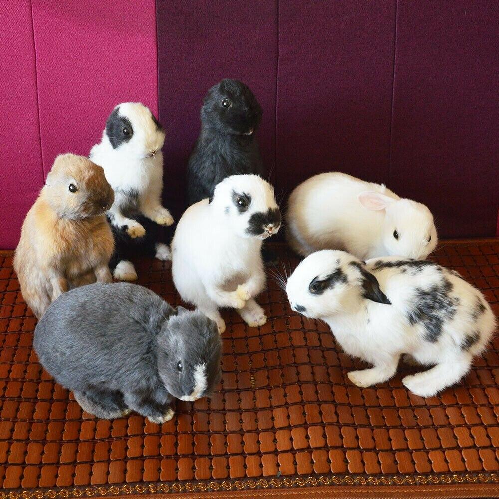 Taxidermy حشو الأرنب ، الأرنب الفراء عينة التدريس/الديكور 5 قطعة عشوائي