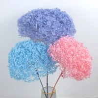 18 20cm head natural preserved anna hydrangea with stem eternal display flower bunch for wedding home decoration accessories