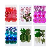 Feuilles de fleurs séchées pressées en vrac pour bricolage Scrapbooking bleu 21 pièces