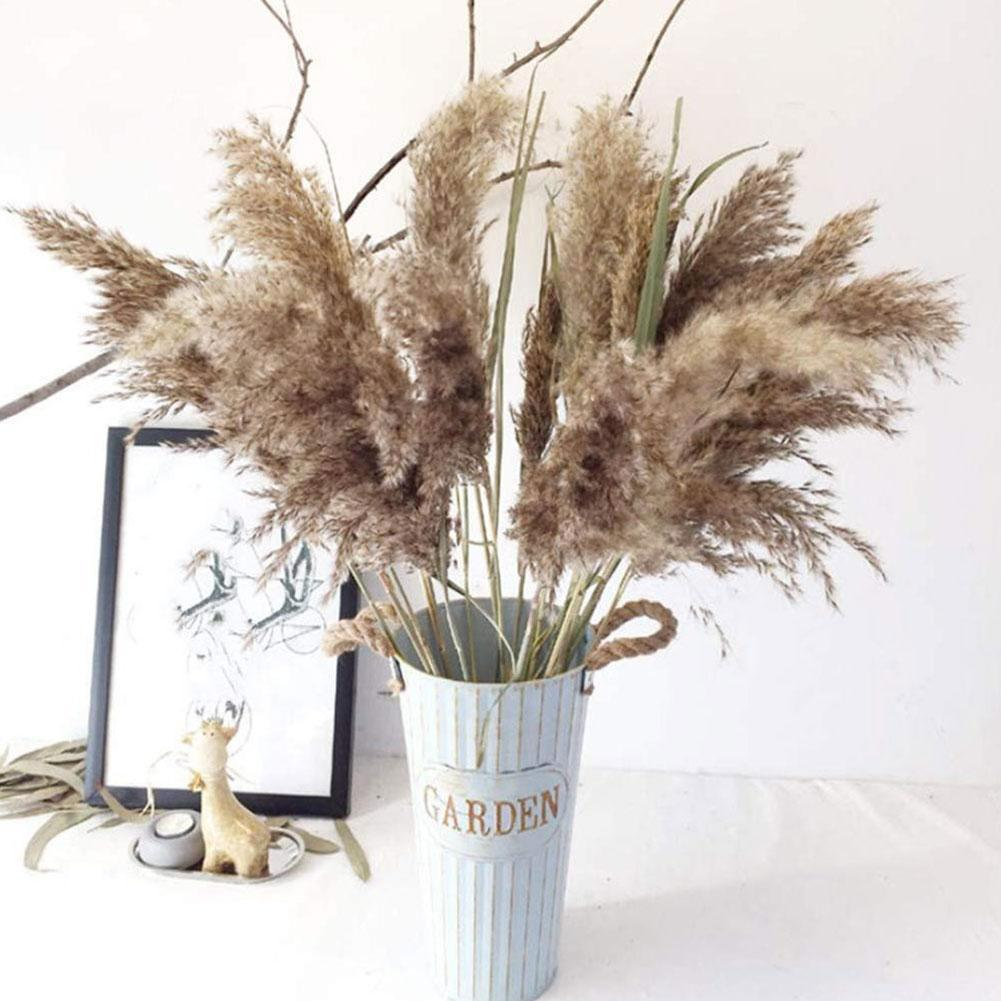 Sell One by One Dry Flower Real Flower Dried Flower Reed Nordic Pampas Dog's Tail Sunny Grass Reed Dried Flower Home Decorations