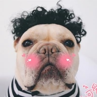 dog cat wig clothes accessories photography props star pet dress up funny funny fashion wig pet toys