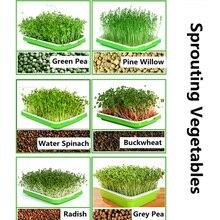Plateau de Germination de graines   Plateaux de Germination de plantes, panier hydroponique à Double couche PI669