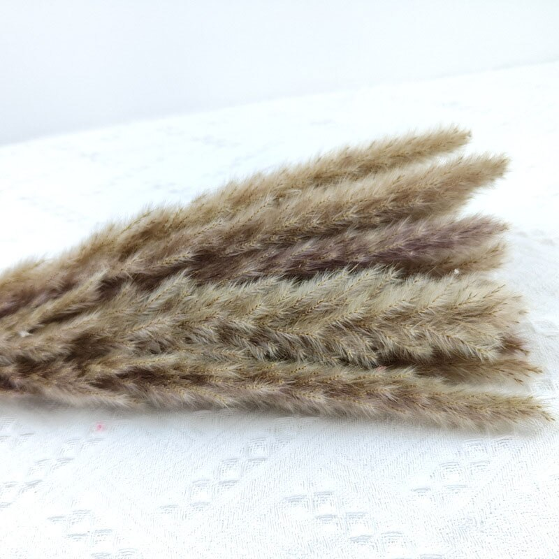 15PCS Natural Dried Pampas Grass Reed Flower Bunch Wedding Bouquet Decors Home Living Room Decoration BOU Dried Flowers