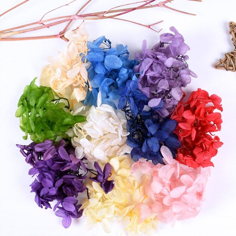Перманентный-цветок-paixi-прессованные-цветы-ювелирные-материалы-драгоценный-камень-кристаллическая-смола-натуральный-сушеный-цветок-Го