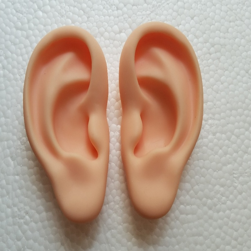 human anatomical anatomy model  silicone ear acupuncture practice model right and left Teaching tools  medical science human 1 1 right hemisphere functional area anatomy human brain model medicine teaching mdn006