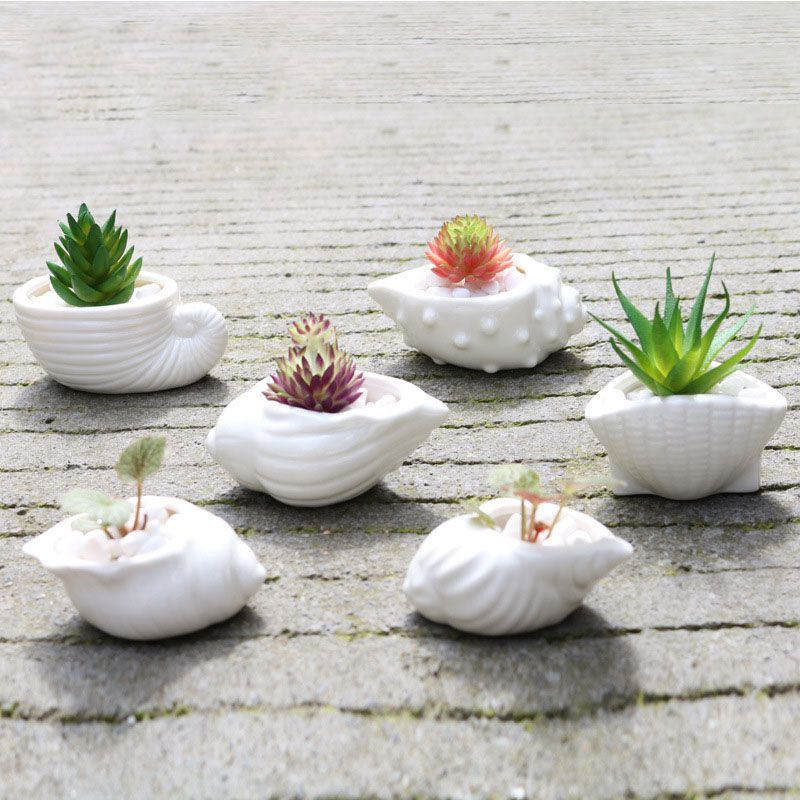 6 unids/set Mini maceta blanca con forma de concha de cerámica suculenta maceta titular Hada jardín Cactus maceta