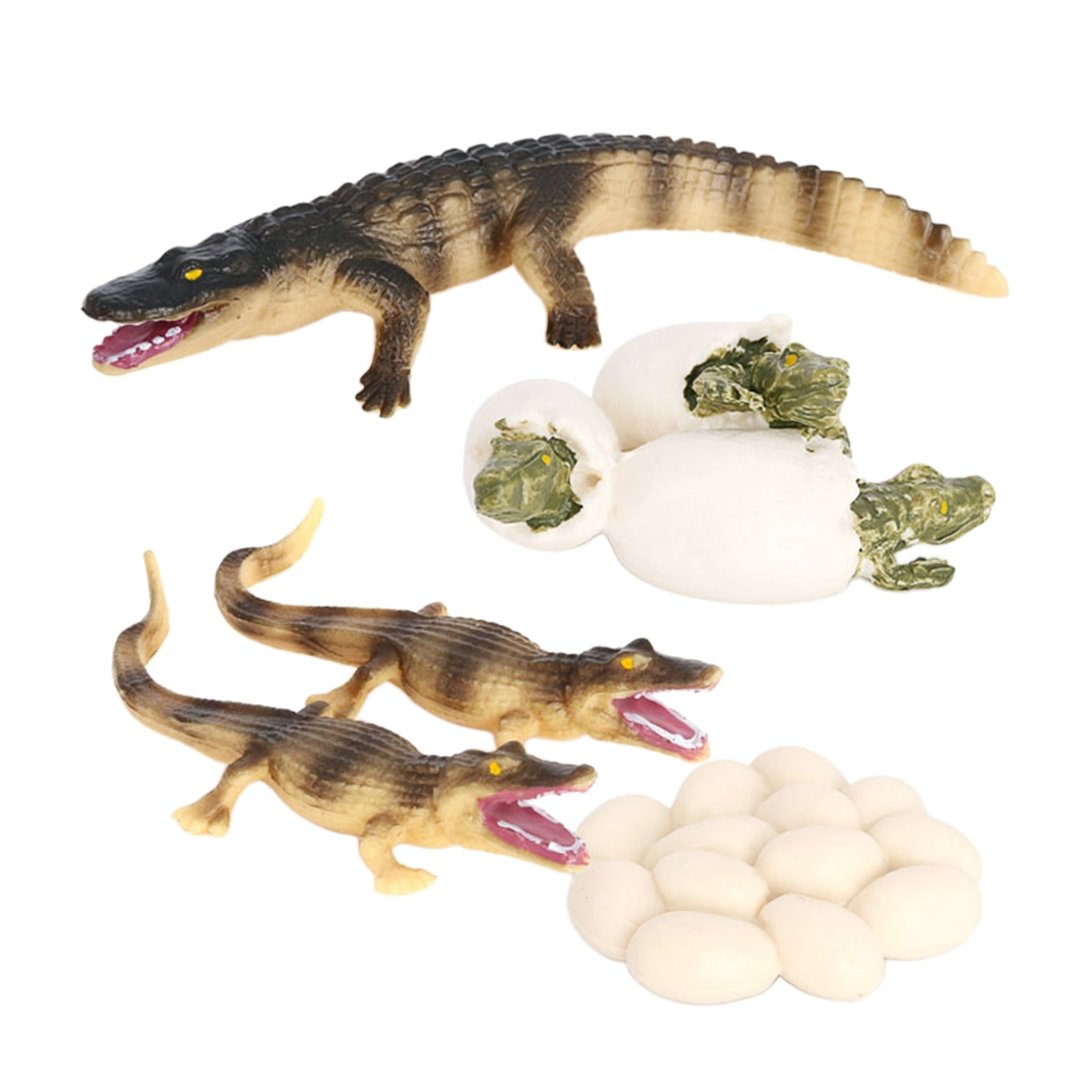 Фото - 4 Stages Life Cycle of Crocodile Nature Insects Life Cycles Growth Model Game Prop Insect Animal Natural Toy katie marsico life cycles