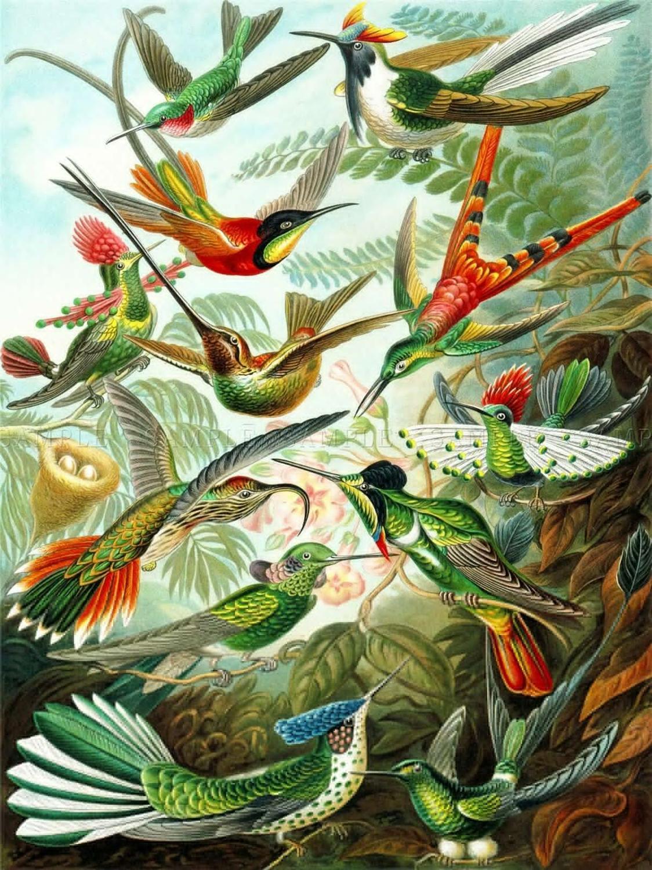 Цветная тарелка ERNST HAECKEL KUNSTFORMEN NATUR HUMMINGBIRDS, художественный принт, Шелковый постер, домашний декор стен