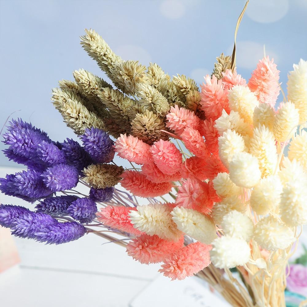 20 pçs/bando material natural cauda de coelho grama flores secas buquês rabos de coelho planta hastes artificial uraria picta decoração para casa