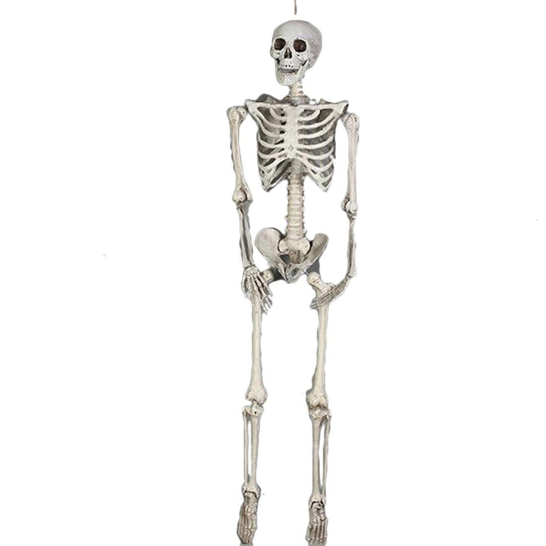 165cm 185cm mobile crâne Simulation crâne humain modèle corps complet Mini figurine jouet Halloween cadeau accessoire