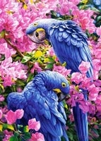 diamond embroidered flowers with two parrots cross stitch 2017 diy 5d full diamond paintings home decorations