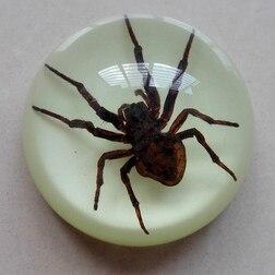 Peluche de ámbar Artificial, muestra de insecto, Araña, ciempiés, escorpión, murciélago, regalo creativo, mesa de hogar de 6,3x3cm