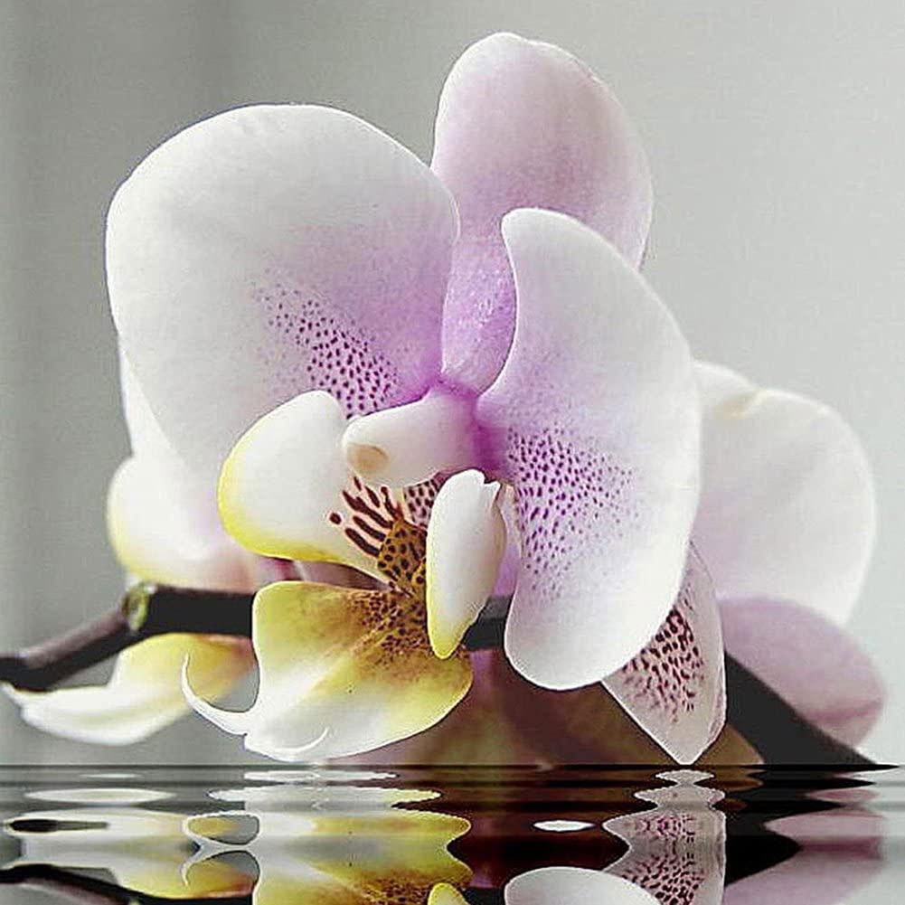 Superfície da água na flor rosa borboleta orquídea pintura diamante branco