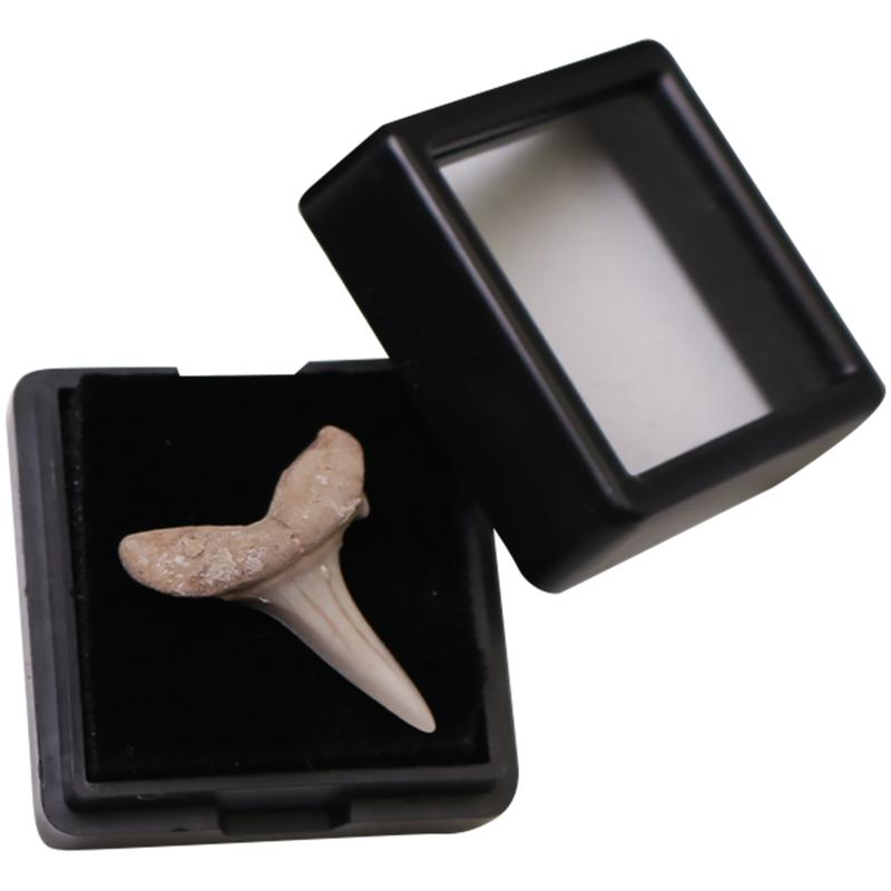 1pc Creative Shark Tooth Fossil Student Science Teaching Material Desktop Decor