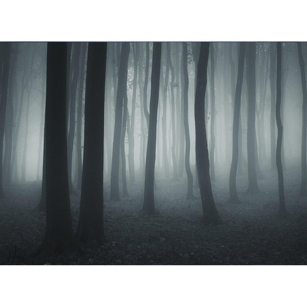 Oscuro Misty madera espeluznante bosque Halloween Fondo magia bruja, mago fantasma fotografía para fiesta Fondo foto de Decoración Accesorios
