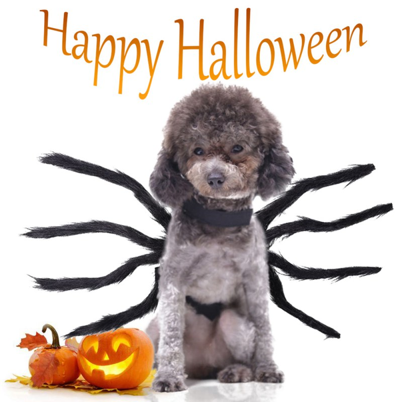 Halloween carnaval mascota araña ropa Festival decoración para perros gatos domésticos vestido de fiesta negro Peluche de imitación traje de araña