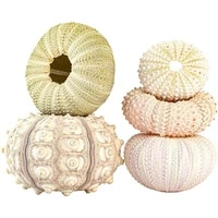 new listing 5pcs sea urchin shell hanging pot air plant holder succulent display container for home garden decor