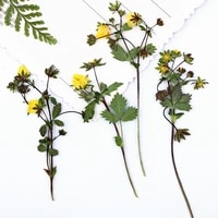 100pcs pressed dried yellow wild strawberry flowers with stalk plants herbarium for jewelry phone case bookmark making diy