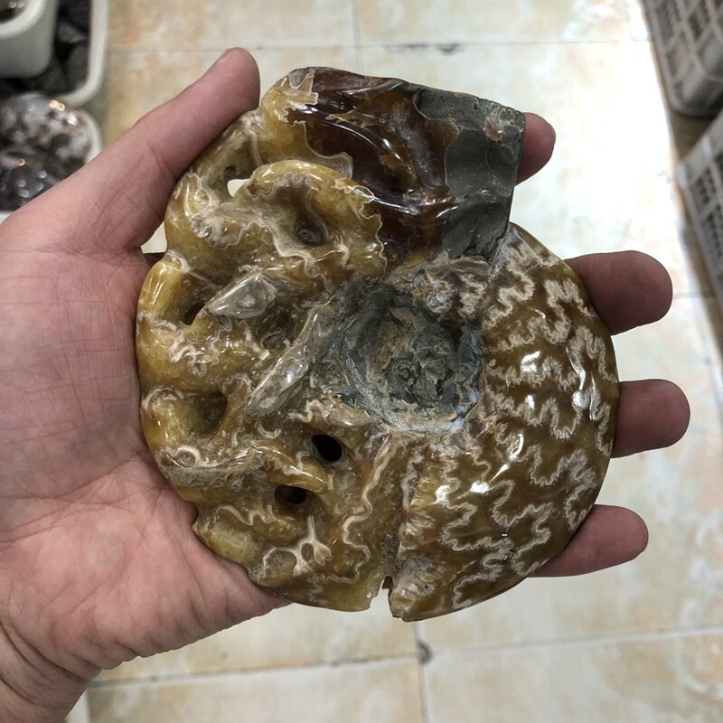 "Sale 1Pcs Natural Ammonite Shell Fossils Speciment,Display,Raw Fosiils Ammonite Polished Stone,Size 2"",3"""