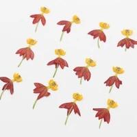 250pcs pressed dried dancing flower plant herbarium for jewelry bookmark postcard phone case photo frame scrapbook diy