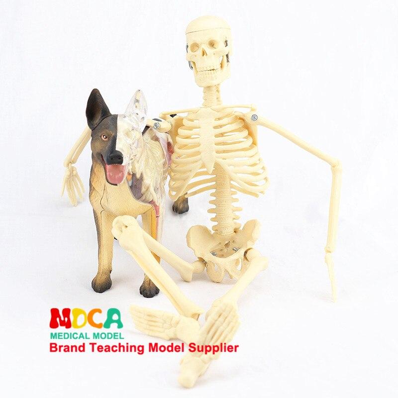 45CM Medical Standard Art Skeleton Model Human Skeleton Skeleton Teaching Model MGG101
