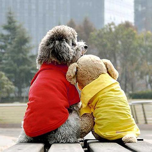 Chaleco de 5 colores para perros, gatos, moda de verano, camisetas con cuello de Polos, ropa para mascotas, Primavera, camiseta de peluche, tamaño XS-XL