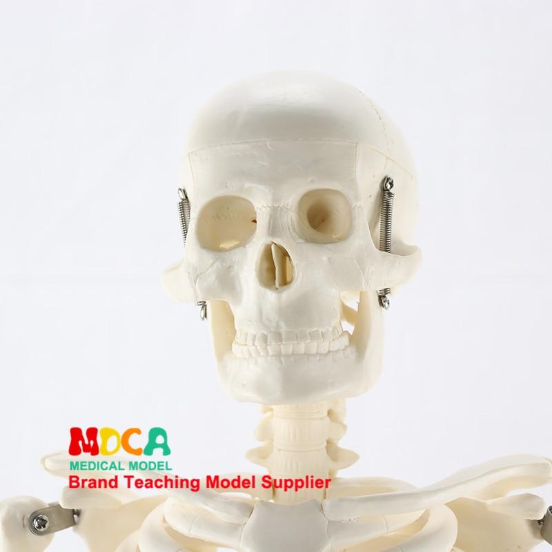 85CM Anatomy Art Medical Standard Human Skeleton Model Skeleton Skeleton Teaching Model MGG201