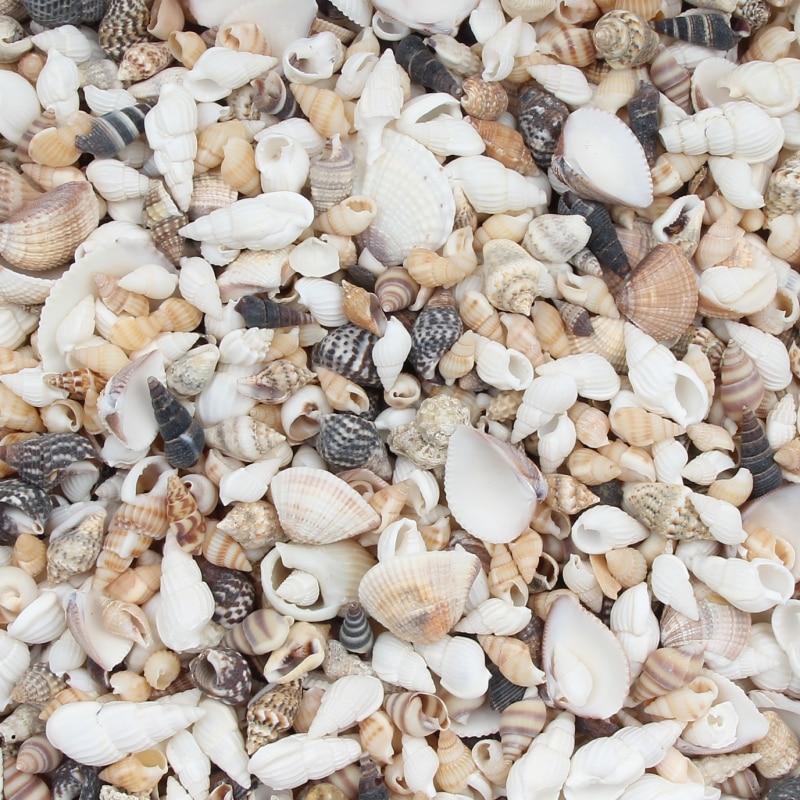 20 Gram Mix Natural Sea Shells Conch Coquillage Beach Decor Craft Diy Marine Style Fish Tank Seashel