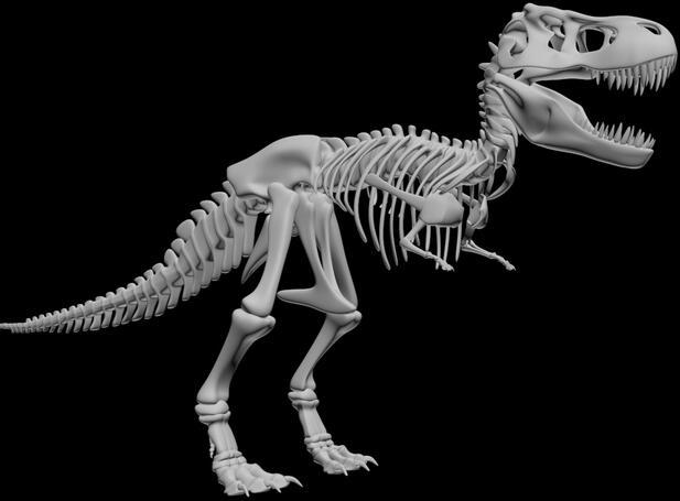 Tyrannosaurus Rex esqueleto orden personalizada de alta precisión modelos digitales 3D servicio de impresión educación herramientas de ayuda de enseñanza ST3008