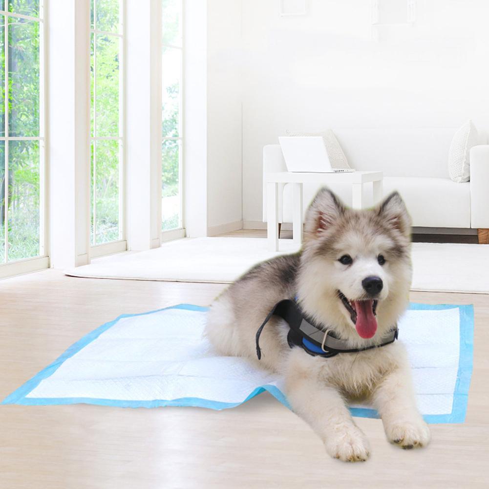 20/40/50/100Pcs Disposable Pet Dog Diaper Super Absorbent Training Pee Pad Nappy