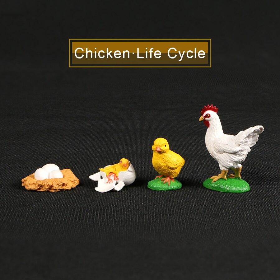 Figuras de acción de ciclo de crecimiento de animales, modelo de simulación de pollo, de plástico y PVC, juguete educativo para niños