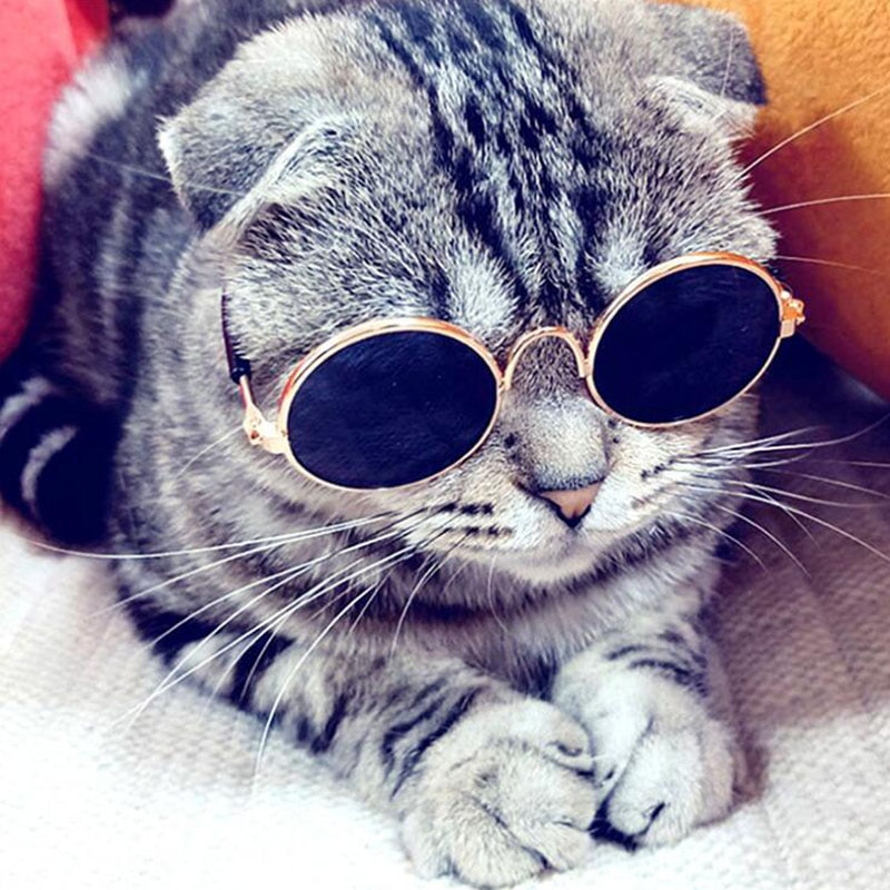 Pet Products Lovely Vintage Round Cat Sunglasses Reflection Eye wear glasses For Small Dog Cat Pet P