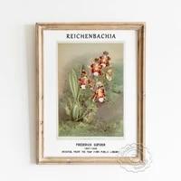 frederick sander exhibition museum poster odontoglossum harryanum from reichenbachia orchids wall stickers modern home decor