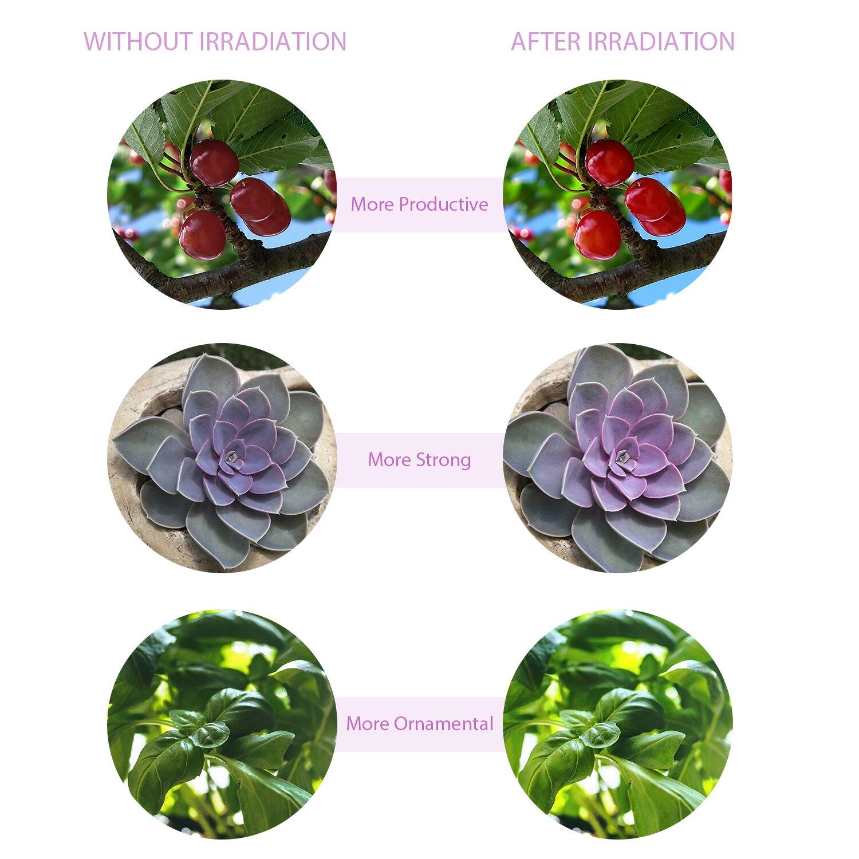 LED Grow Light USB Phyto Lamp Full Spectrum Grow Tent Complete Kit Phytolamp for Plants Seedlings Flowers Indoor Grow Box enlarge