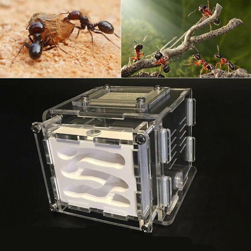 Mini formiga fazenda formigas trabalho formicário educacional ao vivo formigas ninho acrílico formigas habitação ninho inseto gaiola placa de gesso