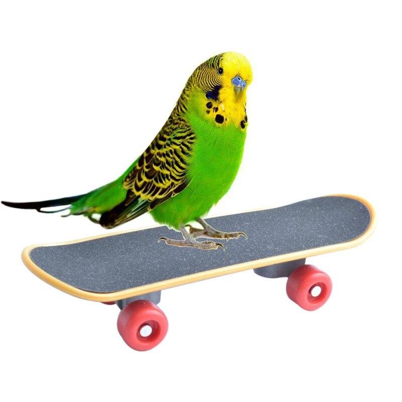 Papagaio durável inteligência brinquedos mini treinamento skate para periquito periquito crescimento engraçado brinquedo moagem garra mini skate