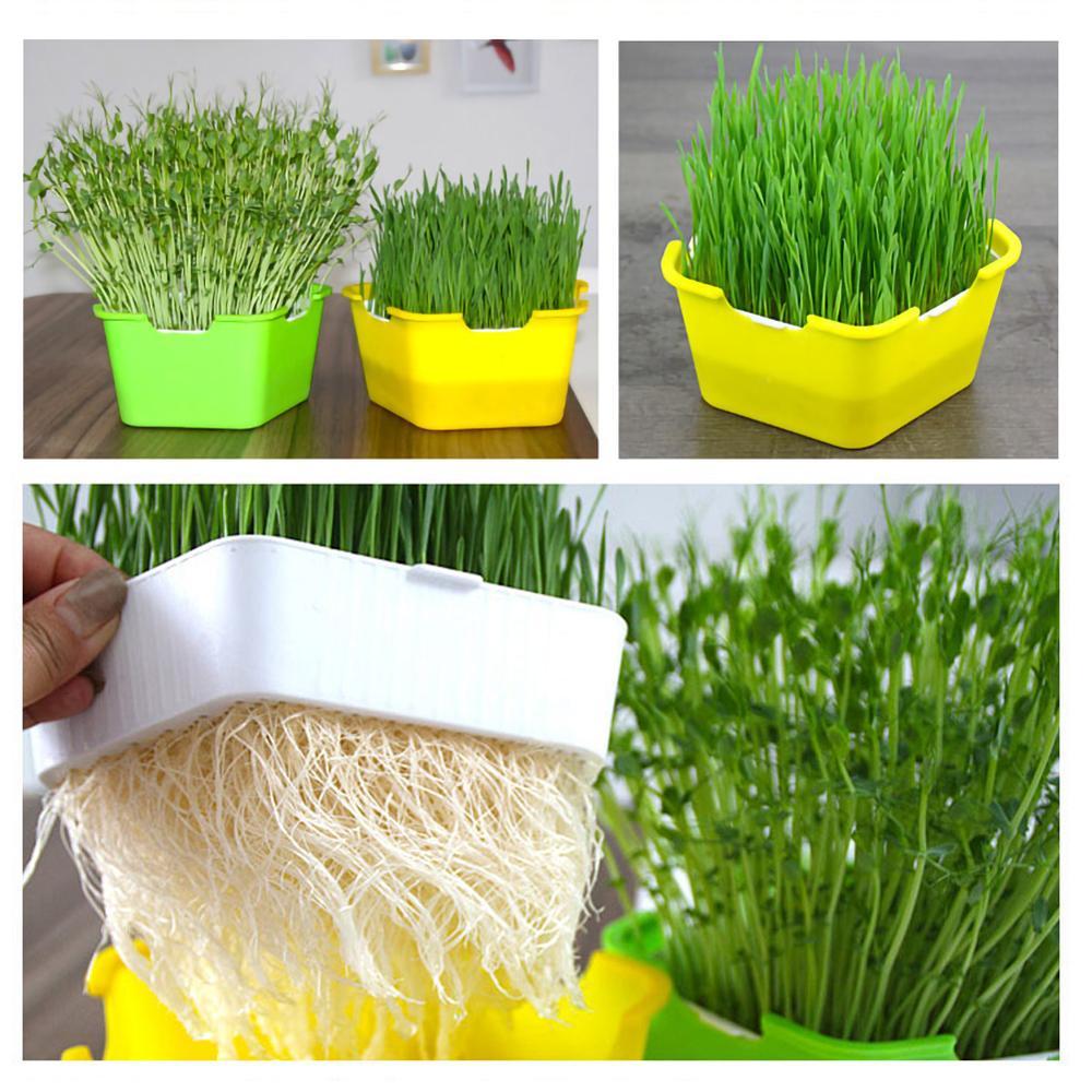 Sprossen Sämling Tray Zucht Box Katze Gras Pflanzung Box Hydrokultur Blume Korb Sprossen Pflanzung Box Hydrokultur Set
