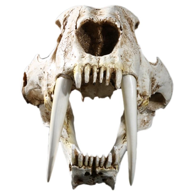 Dente de Sabre Modelo de Esqueleto Tamanho Americano Animais Antigos Gato Tigre Crânio Saberdente Smilodon Fatalis Modelo Animal Mod Quente-1:1