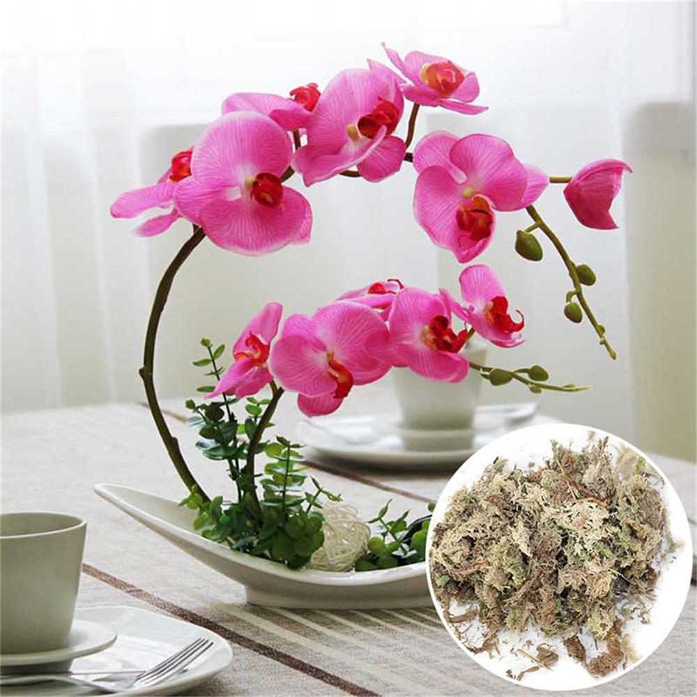 Garden Supplies 12L Sphagnum Moss Moss Sphagnum Nutrition Organic Fertilizer For Orchid Phalaenopsis Musgo Sphagnum Flower