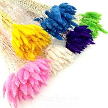 50 pçs flores secas naturais coelho cauda da grama coelho buquê colorido lagurus ovatus decorativo flor decoração de casamento para casa